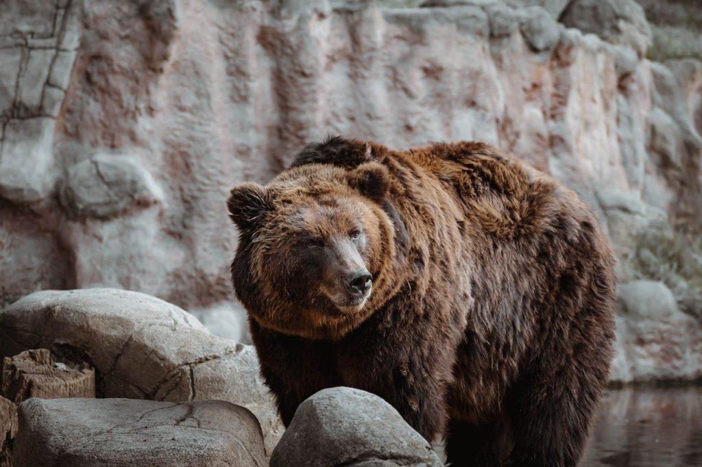 zvieracie atrakcie - medvede