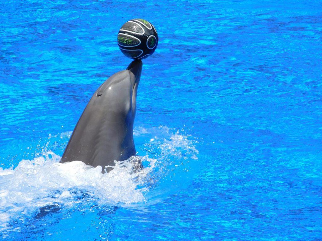 zvieracie atrakcie - delfíny