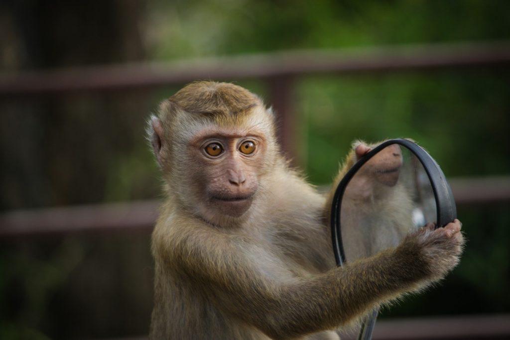 zvieracie atrakcie - opice