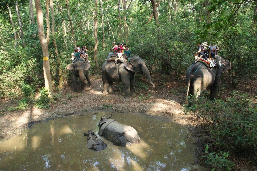 Zvieracie atrakcie - jazdenie na slonoch
