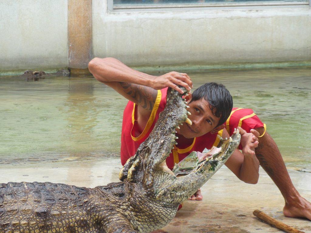 zvieracie atrakcie - krokodíly