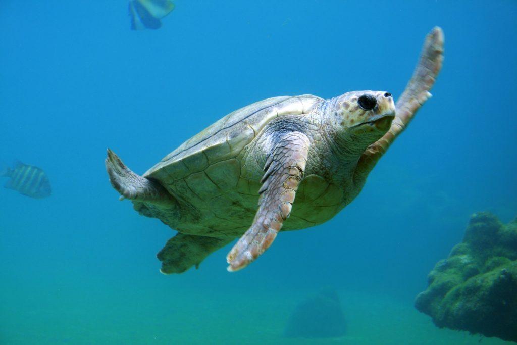 zvieracie atrakcie - morské korytnačky